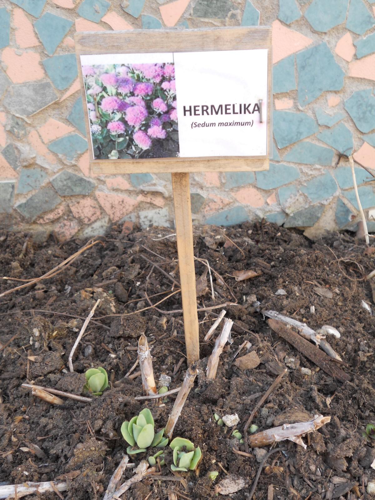 solska_vrtilnica-10